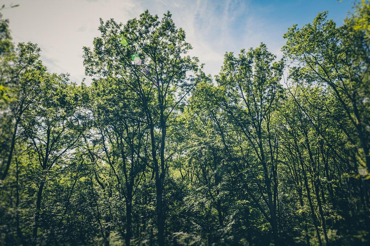 Consultor Ambiental Aplicou a Fórmula de Lançamento